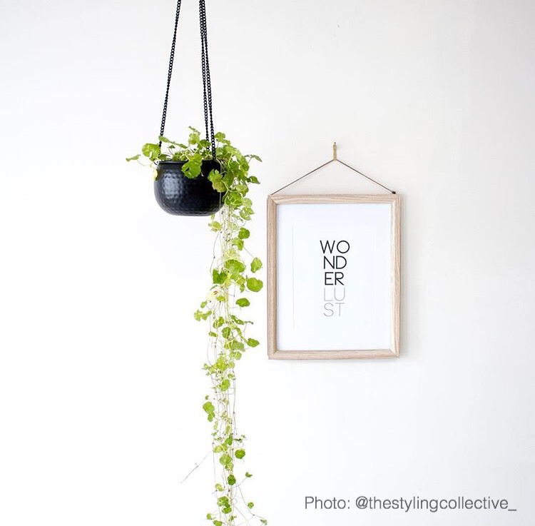 Matte Black Hanging Planter styling collective